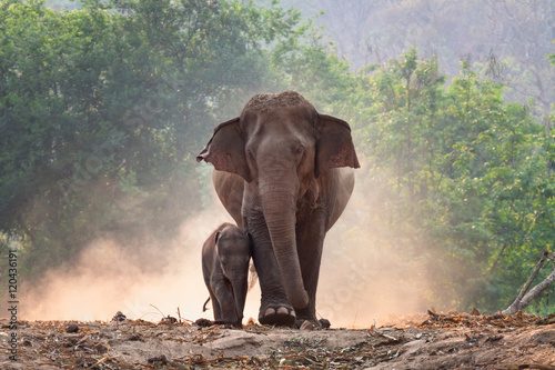 Photo Mother and baby elephant walk together