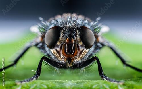 In de dag Macrofotografie Bluebottle fly macro