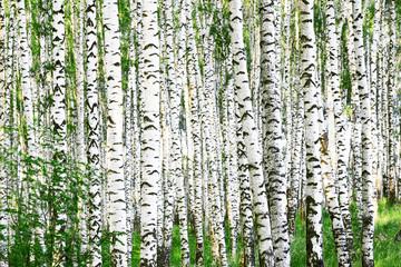 Panel Szklany Skandynawski summer in forest birch