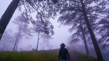 Dark Misty Forest With Lonely Man With Hat On Path Around With Pine Trees, Find And Lost Concept, Horror Concept At Phu Soi Dao, Uttaradit, Thailand.