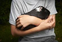 Boy Holding A Guinea Pig