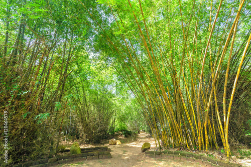 Foto op Plexiglas Bamboe High bamboo both side bend to cover along dirt road create idyllic beauty in countryside