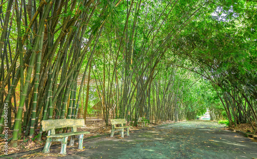 Poster Bamboe Bamboo walkway leading into the forest with bamboo sides of the road is a beautiful bend