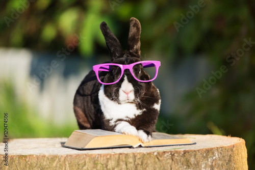 funny rabbit in glasses reading a book