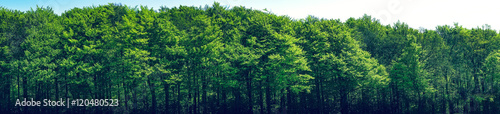 Foto op Canvas Bos Green trees scenery in panorama