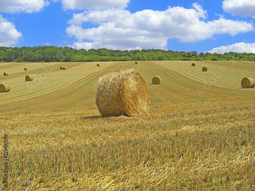 Photo Stands Melon Paysage de campagne