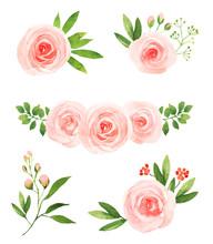 Watercolor Pink Roses Flower Illustration Elements