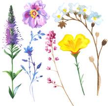 Painted Wildflower Flowers Set...