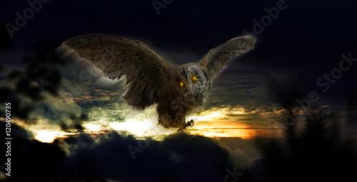 Photo Stands Owls cartoon Eule Wolken D