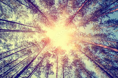 Fotografía  Forest concepts.