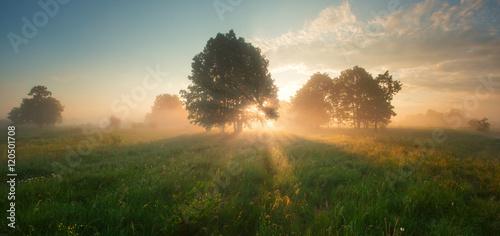 Foto op Plexiglas Landschappen Bright sunrise on spring meadow