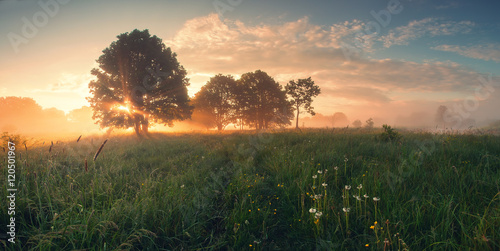 Deurstickers Ochtendgloren Colorful spring sunrise on meadow