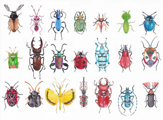 Many beetles on a white background executed with watercolors.