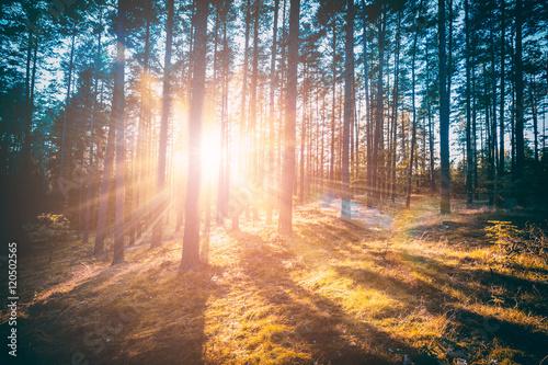Fototapeten Wald Forest concepts.