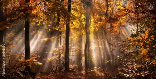 Fotografie, Obraz  Magische Lichtstimmung in einem nebligen Wald im Herbst