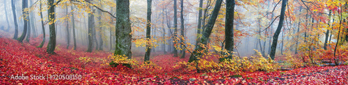 Poster de jardin Taupe Autumn in the mountains of Europe