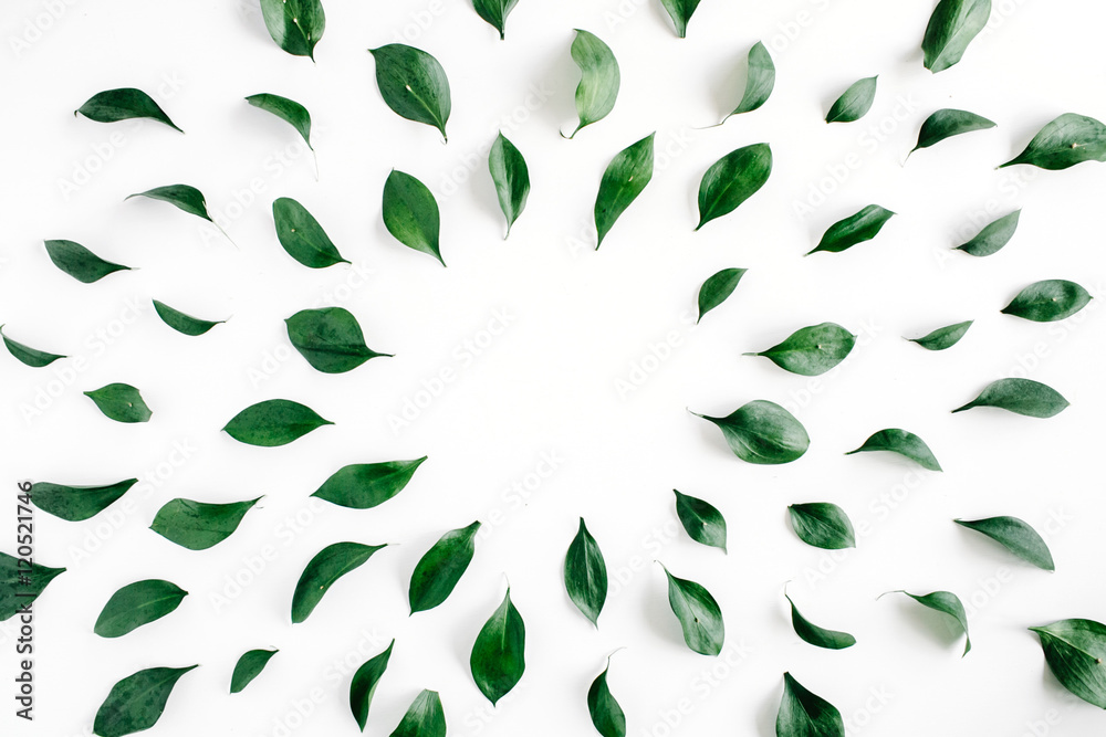 Fototapety, obrazy: green leaves frame on white background. flat lay.