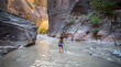 The Narrows of Virgin River, Zion National Park, Utah, USA. Hiker looking at the sunlight reflected on the popular slot canyon's walls.