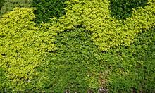 Variety Of Plants In Vertical Garden Texture