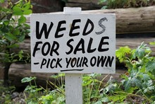 Weeds For Sale Wooden Sign In ...