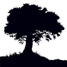 Vector Landscape. Oak Tree On The Hill