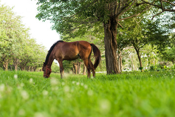 horse eating in green field