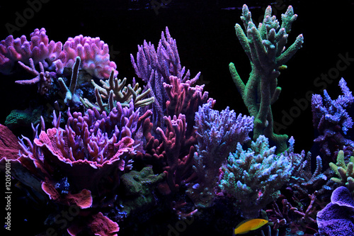 Dream coral reef aquarium tank Canvas-taulu