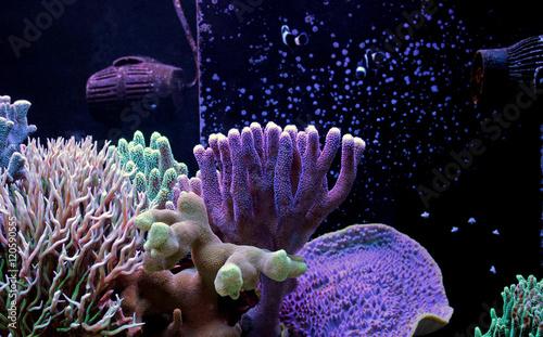 Poster Sous-marin Dream coral reef aquarium tank