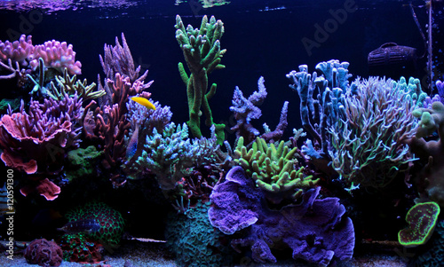 Poster Coral reefs Dream coral reef aquarium tank