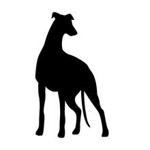 Greyhounds Dog Hunting Vector ...