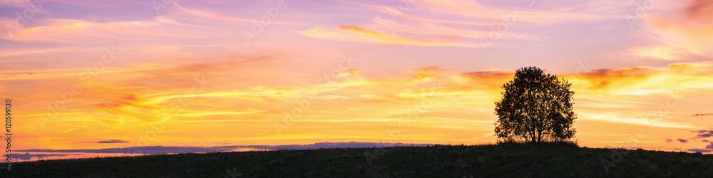 Fototapeta Panoramic landscape with single tree over sunset sky