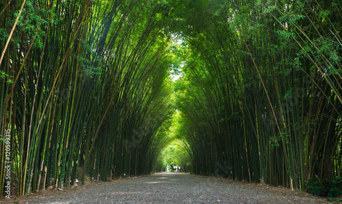 Garden Poster Forest bamboo tunnel in Thailand