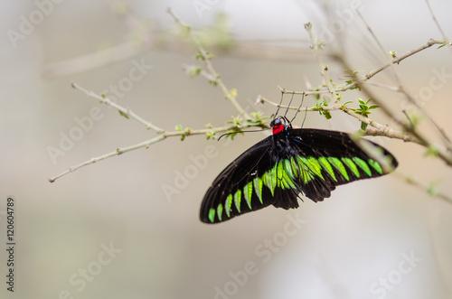 Foto auf Leinwand Schmetterling Vlinder op een tak