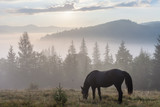 Fototapeta Konie - Mountain landscape with grazing horse