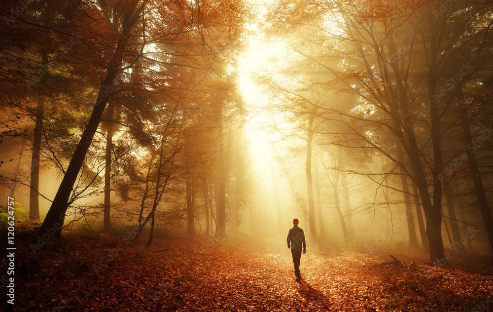 Fototapety, obrazy: Spaziergang im Wald bei atemberaubender Lichtstimmung im Nebel