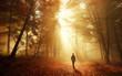 canvas print picture - Spaziergang im Wald bei atemberaubender Lichtstimmung im Nebel
