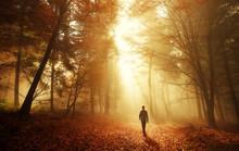 Spaziergang Im Wald Bei Atembe...