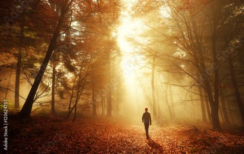 Obraz Spaziergang im Wald bei atemberaubender Lichtstimmung im Nebel - fototapety do salonu