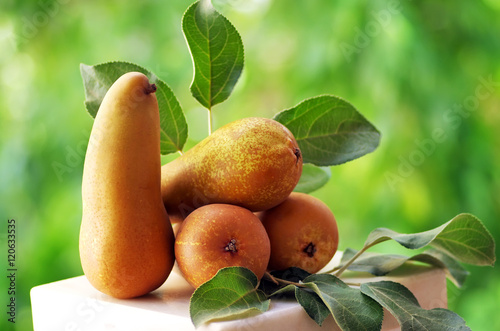 Ripe Abate Fetel pears on green background Canvas Print
