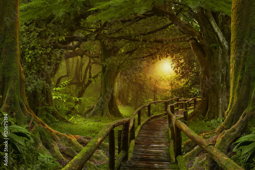 Photo Stands Road in forest Sunset in deep tropical jungles of Southeast Asia