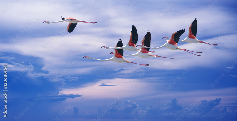 Flamingos over blue sky background