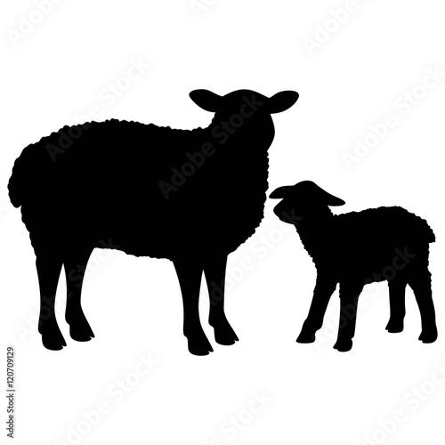 Fotografie, Obraz  Sheep Silhouette