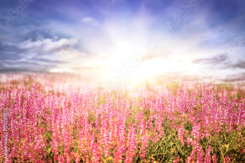 Fototapety, obrazy: beautiful spring landscape with sun and flowers, amazing natural
