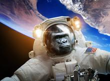 Astronaut Monkey Gorilla In Sp...
