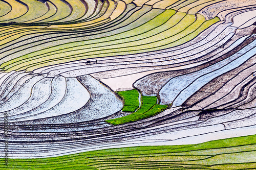 Foto auf Gartenposter Reisfelder Beautiful terraced rice fields in Vietnam