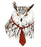 Szkic wektor sowa w krawat. Retro ilustracja - 120769994