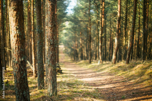 Spoed Foto op Canvas Weg in bos forest on a sunny day , with a focus on the foreground