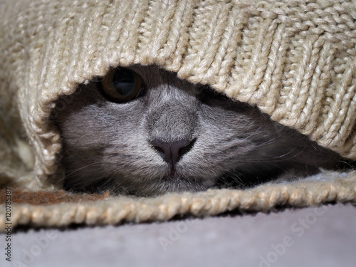 The cat hid in a warm sweater Fototapet