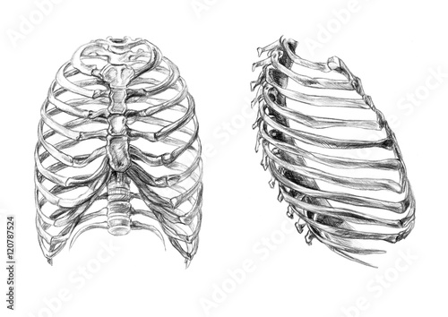 Obraz na plátně Hand drawn medical illustration drawing with imitation of lithography: Thorax bo