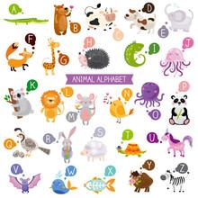 Cute Kids Animal Alphabet